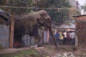 Elefánttámadások Indiában