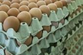 Romániában is felbukkant a szennyezett tojás